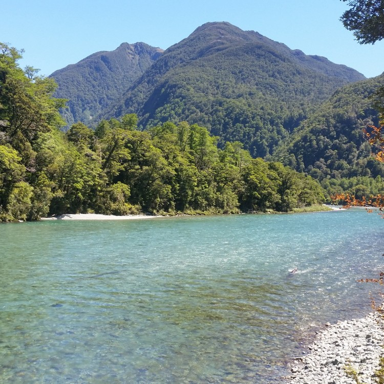 Crystal clear waters greet us in the lower Hollyford Valley as we walk