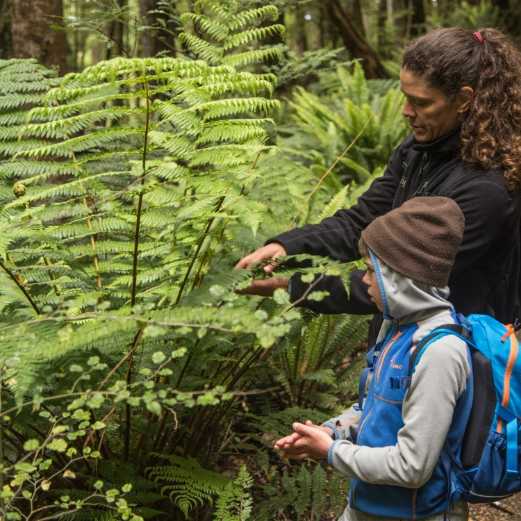 The local guide will share information on the native flora as you walk along